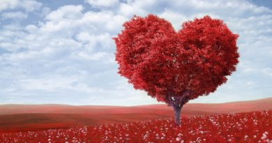 Cherish Your Love With Your Partner This Valentine