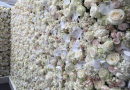 How flower wall backdrops can enhance different event locations?
